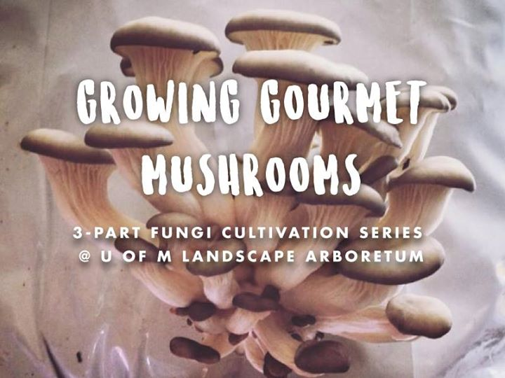 Growing Gourmet Mushrooms