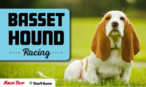 Basset Hound Racing